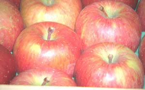 葉とらずりんご(ゴールド農園)