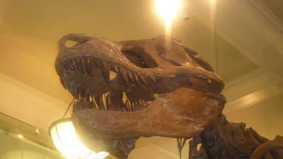 ニューヨーク自然史博物館