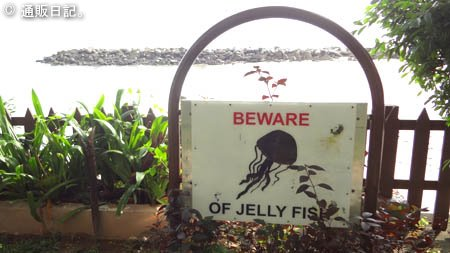 クラゲに注意!
