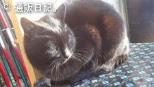 鬼怒川仁王尊プラザ 猫