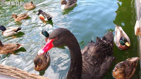 掛川花鳥園 水鳥