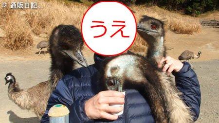 掛川花鳥園 エミュー