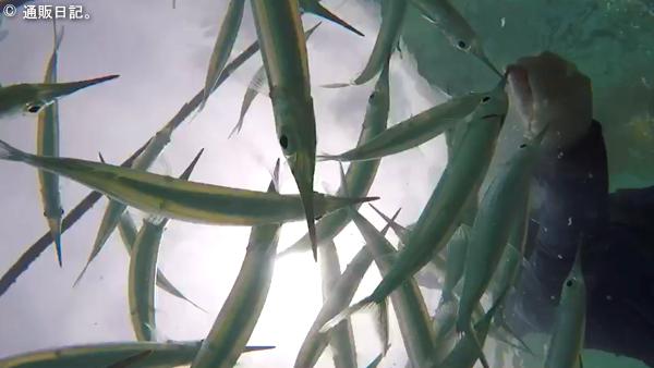 イパオビーチ 魚の餌付けに挑戦