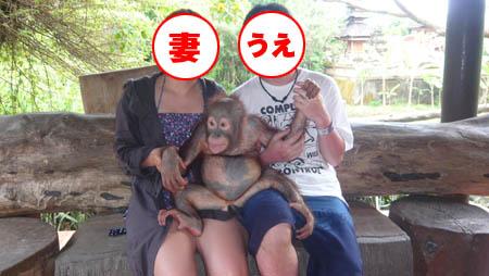 バリサファリ オランウータンの赤ちゃんと記念撮影
