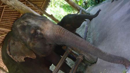 バリサファリ ゾウに餌やり