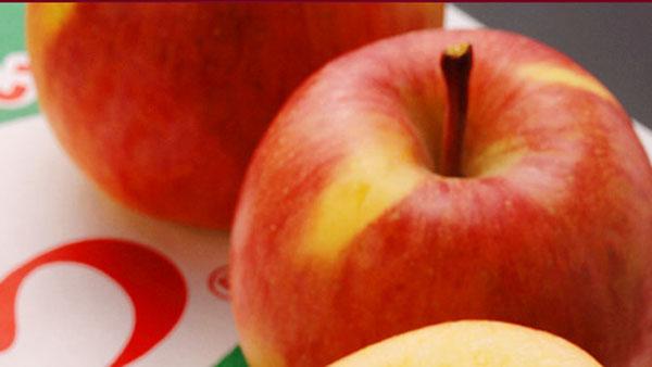 青森 究極の蜜入りりんご こみつ(品種名:こうとく 高徳)が期待外れなのは品質管理に問題あり?