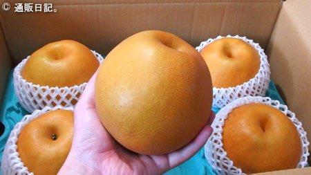 今が旬 栃木県生まれの赤梨 にっこり 大玉が美味い!